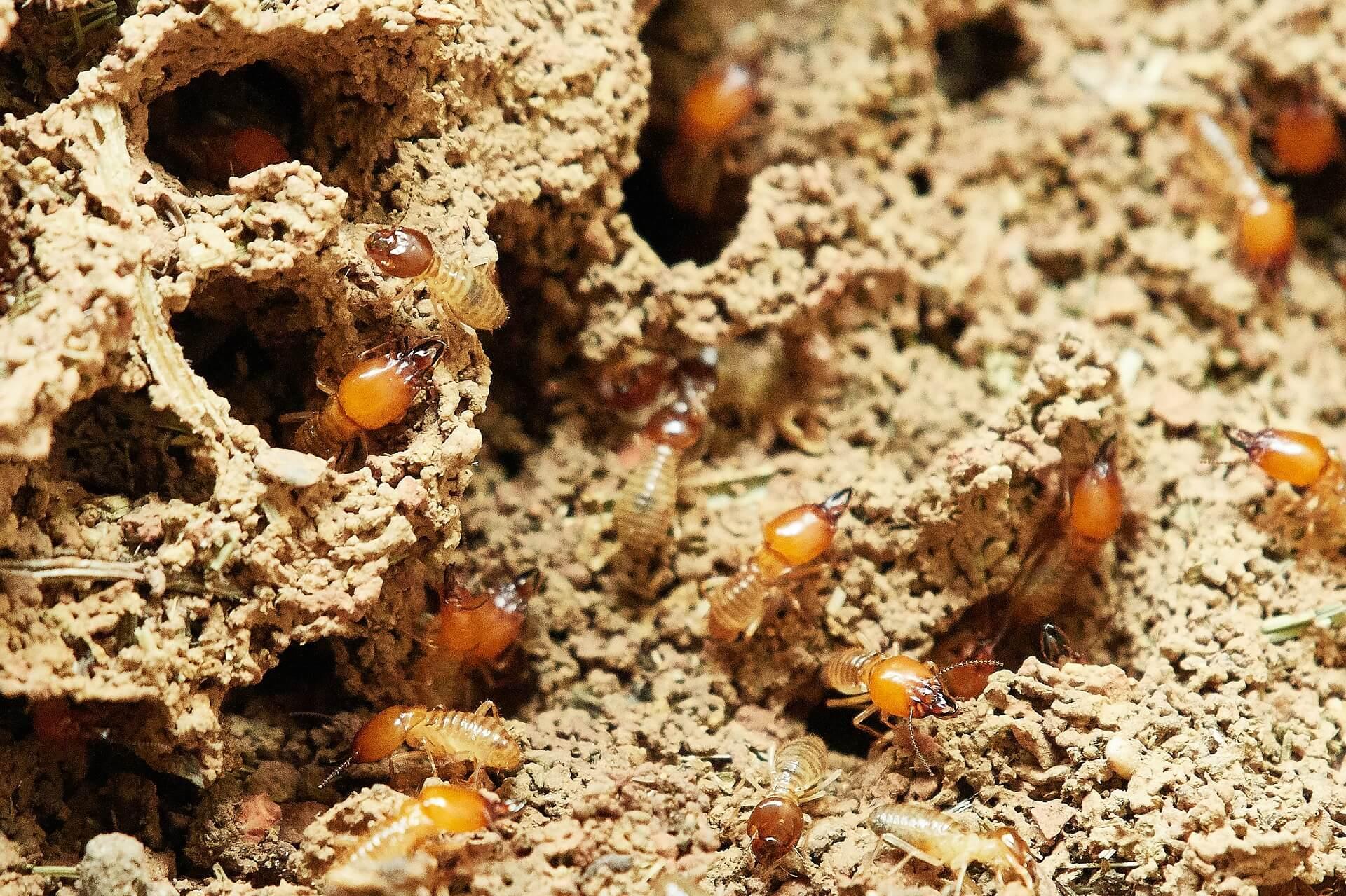 anti termites gsft