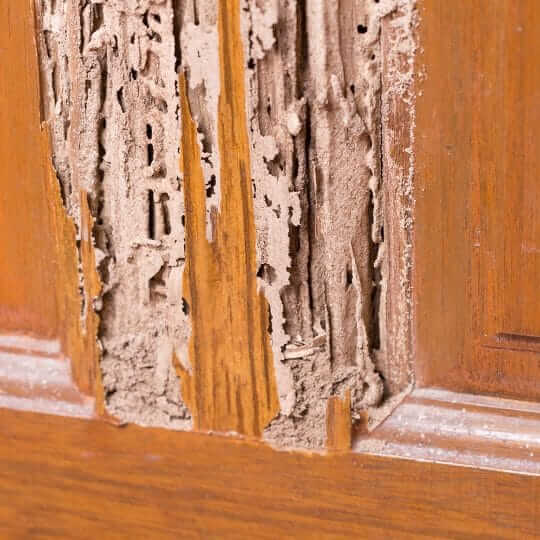 termites degats bois