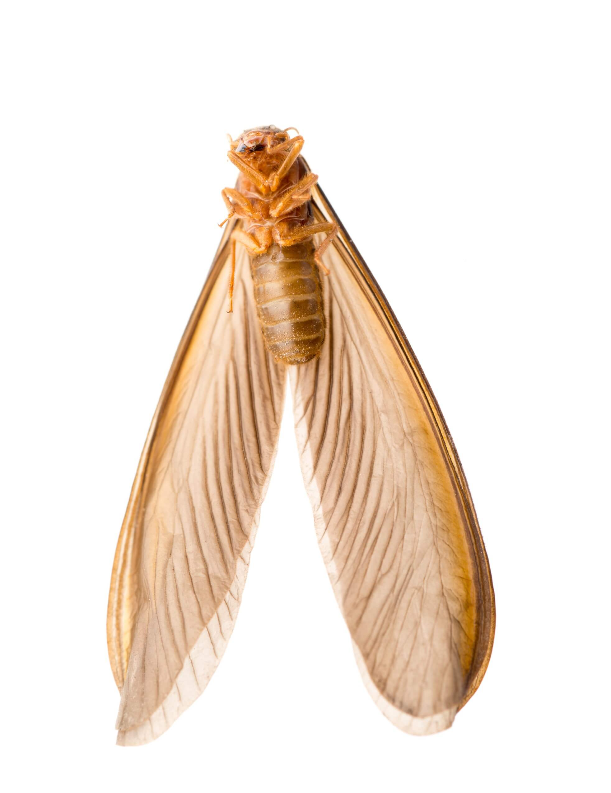 termite perpignan