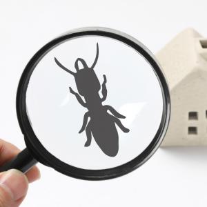 detecter termites